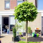 Aanbouw woonhuis Dronten